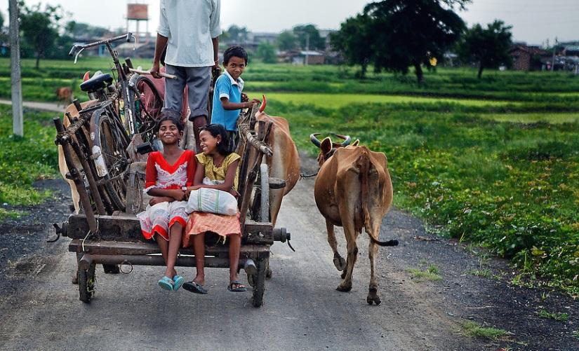 Rural Life - Vinod Khapekar
