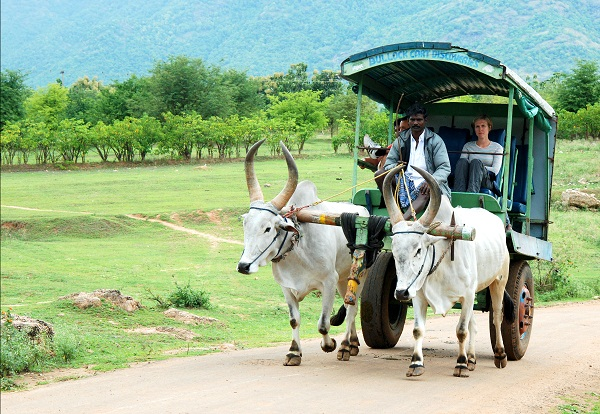Bullock-cart-at-thekkady-farm-stay
